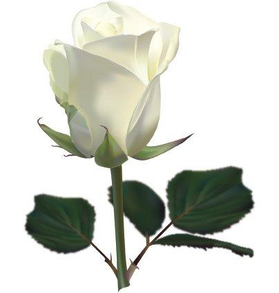 Как сделать синюю розу