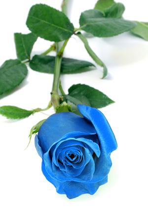 How to make a blue rose