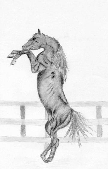 Как рисовать лошадь, вставшую на дыбы
