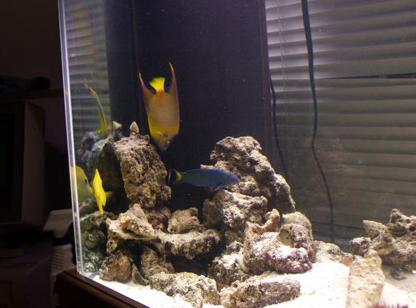 Как сделать самому грот в аквариуме