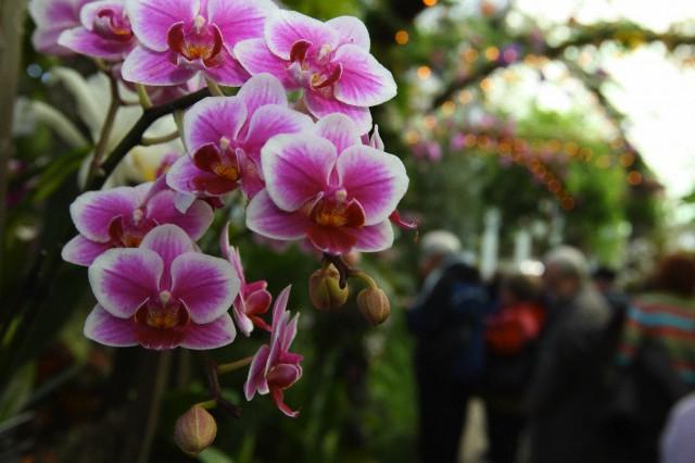 Нежную орхидею можно попытаться реанимировать даже если она сбросила все листья