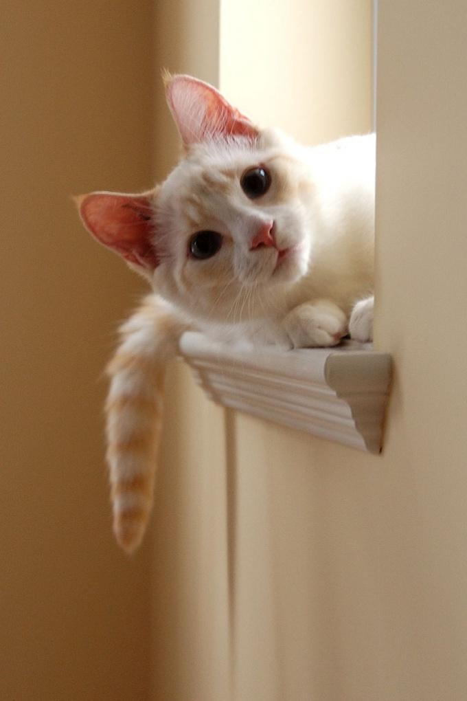 содержать кошку