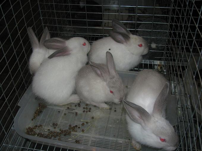 кролики в частном доме