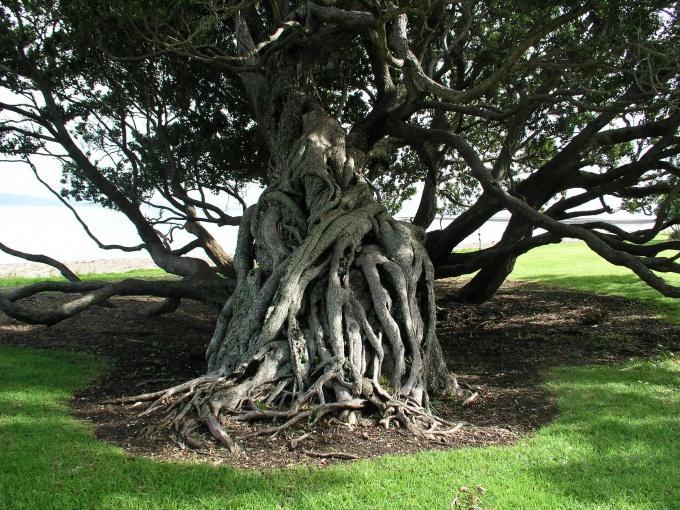 Дерево символизирует силу и верность