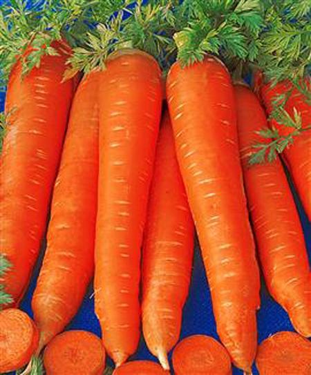 Как вырастить морковку