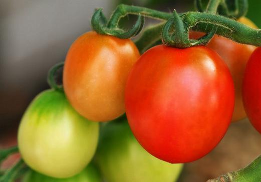 Как посадить рассаду томатов