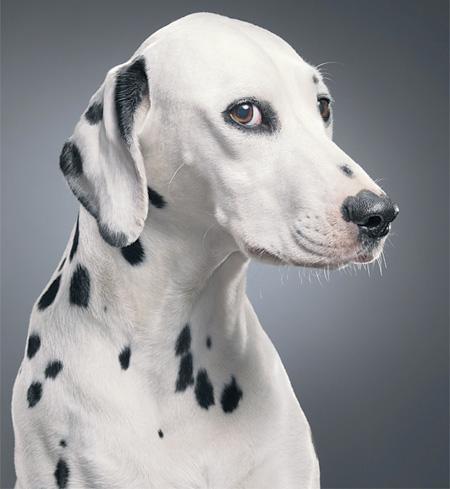 как фотографировать собаку