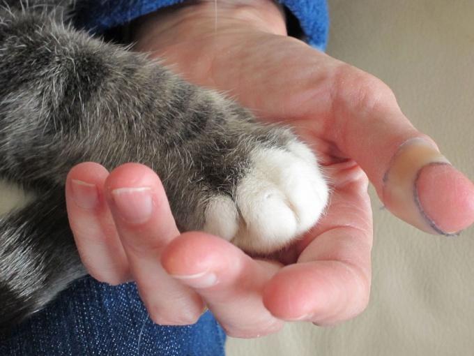 Как сбить <strong>температуру</strong> у <b>кошки</b>