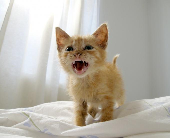 как сбить температуру коту