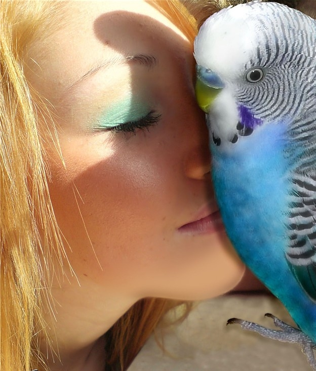 как учат попугая разговарить