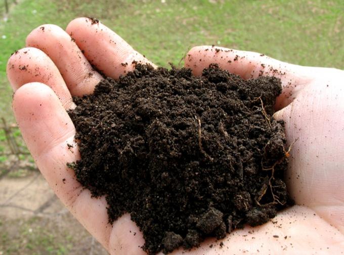 Сохранность почвы во многом зависит от бережного к ней отношения