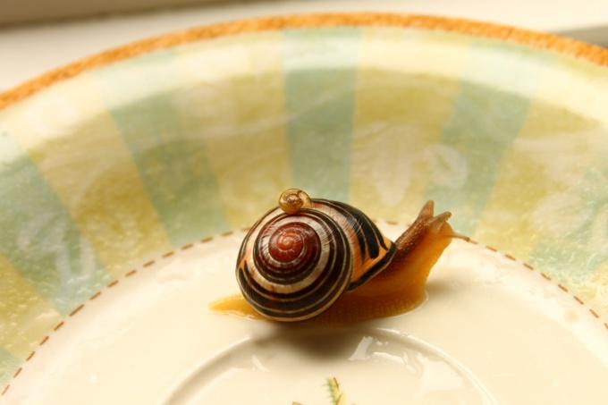 Snail - the most undemanding Pets