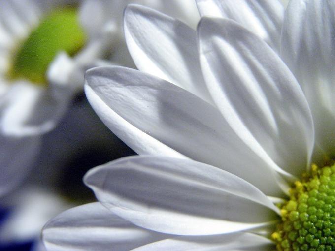Как сделать пластиковые цветы