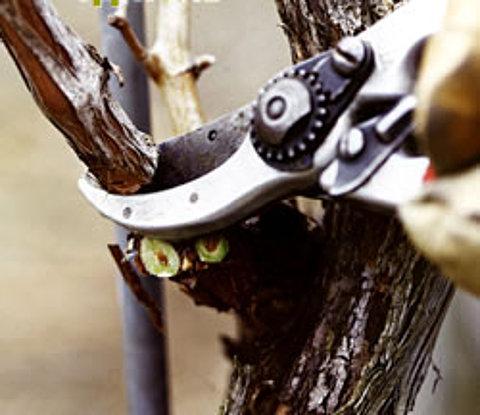 Как сделать обрезку деревьев