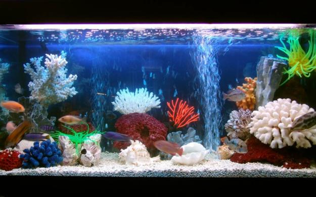 Как сделать морской аквариум