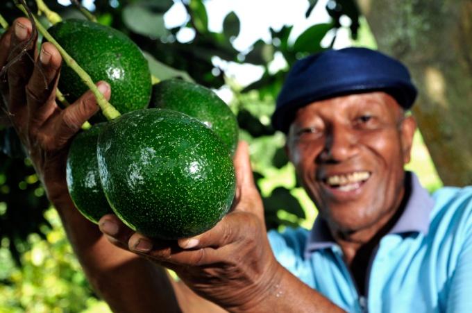 Употреблять авокадо можно отдельно или в составе многих других блюд