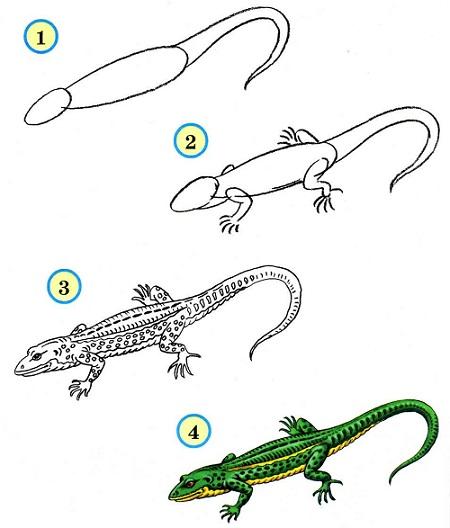 Поэтапный рисунок ящерицы