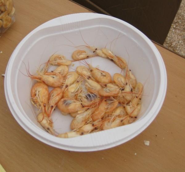 How to catch shrimp