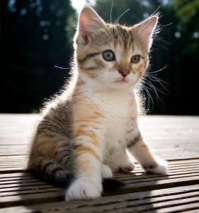 кормление котят 3 месяца