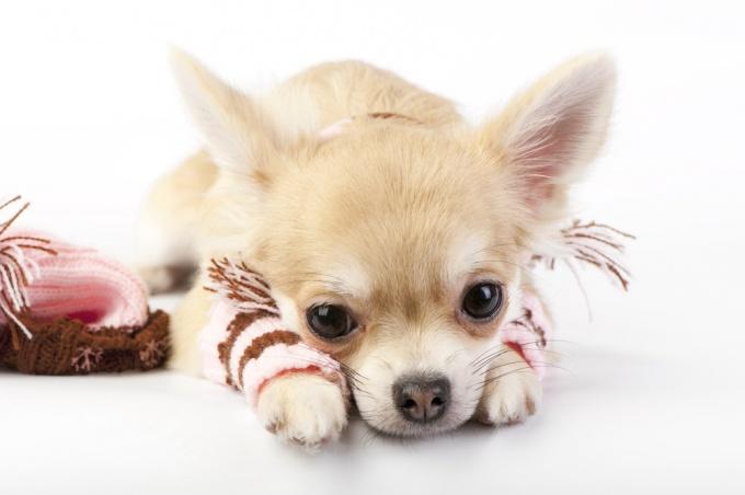 Как связать носки для собак