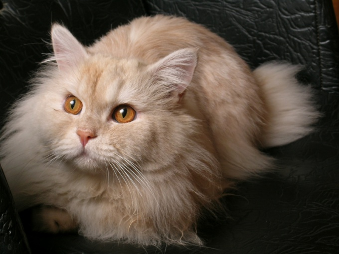 Кошка - друг человека