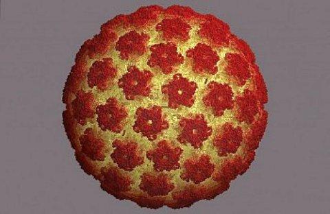Папилломавирус под микроскопом