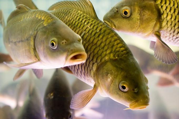 Рыба- очень полезный и ценный продукт.