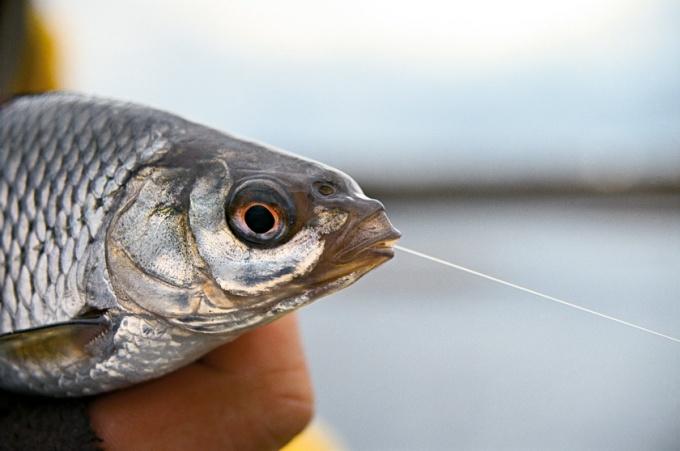 Резинку своими руками для рыбалки фото 275