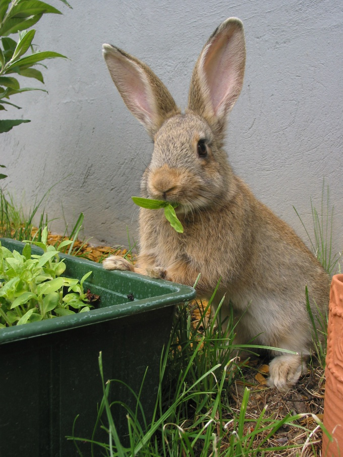 How to feed and care for rabbits