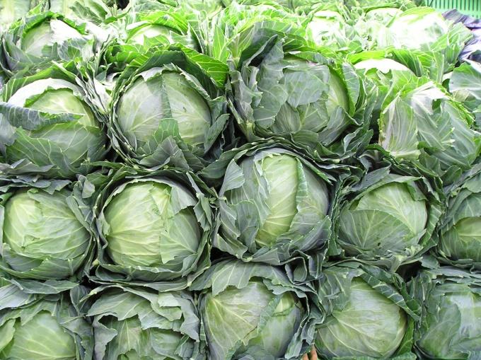 Как выбрать капусту