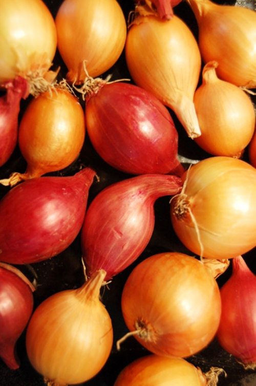 How to grow onion seeds