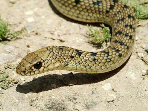How to get rid of snakes in the area