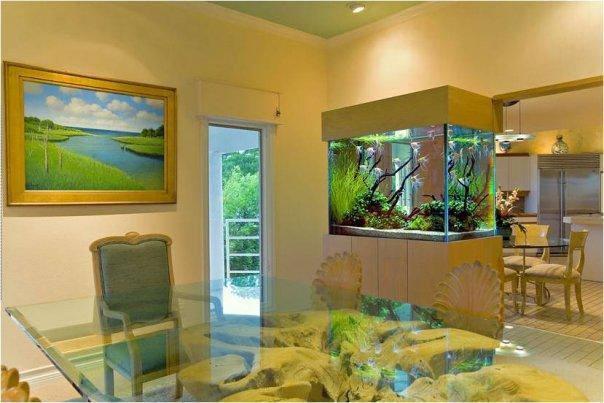 Как устроить аквариум