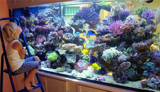 устроить аквариум