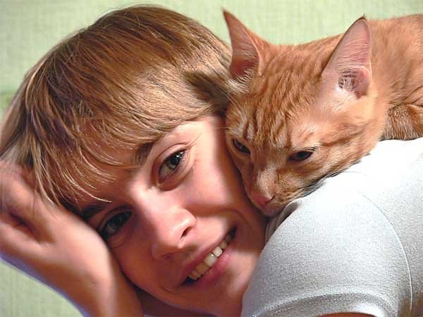 как приучить уличного котенка