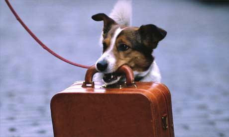 как провести собаку в поезде