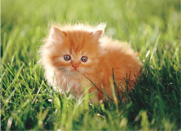 Как приучить котёнка к кличке