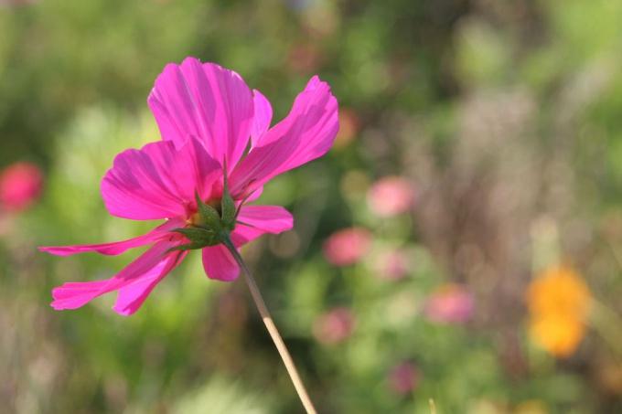 Засахаренные цветы - простой и быстрый элемент декора