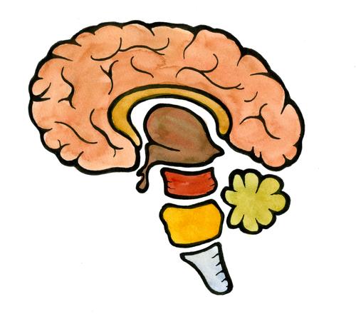 Как лечить сосуды головы