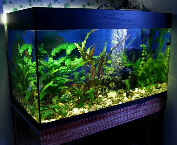 How to make an aquarium out of glass