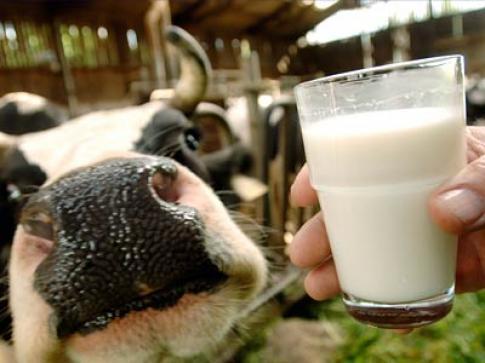 Как стерилизовать молоко