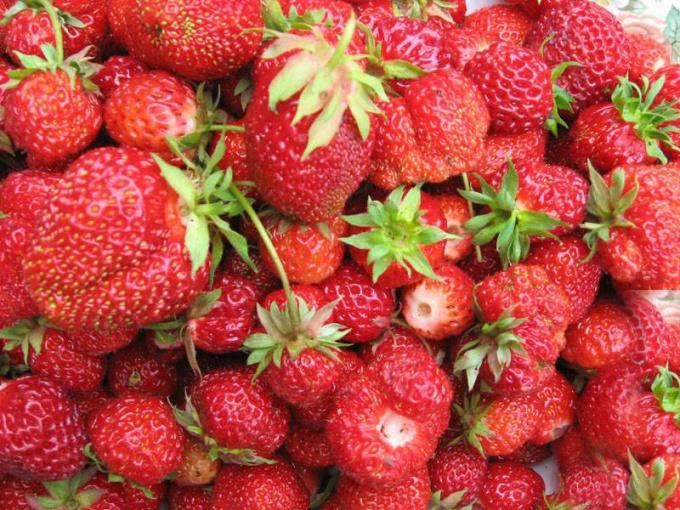 Everbearing strawberries bear fruit all summer