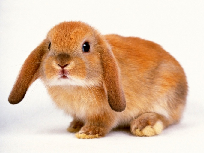 Как приучить декоративного кролика к туалету