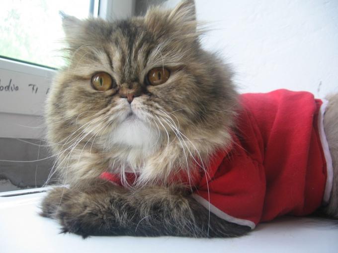 тёплая одежда для кошек