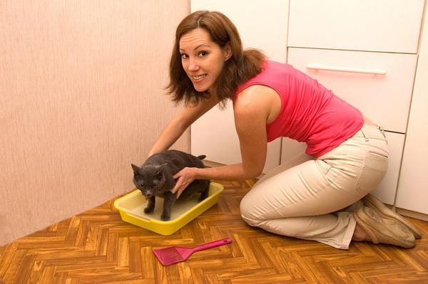 как приучить кошку к лотку с сеткой