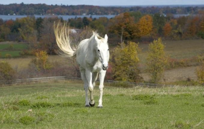 Подружитесь с лошадью - исполните свою мечту, почувствуйте свободу и силу этого животного