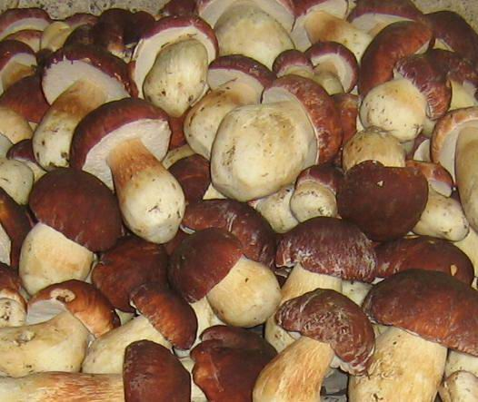 How to defrost mushrooms