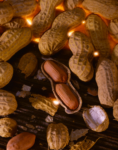 Прорастить получится только необжаренные орехи