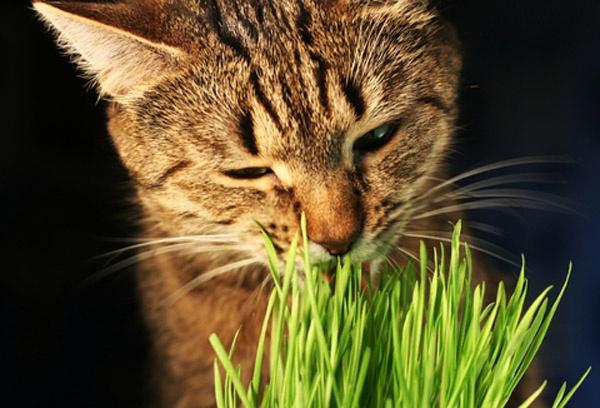 Как приучить <b>кота</b> к еде