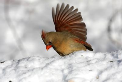 Зимой птицам бывает очень сложно найти пропитание